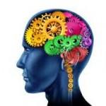 cerveau-roue